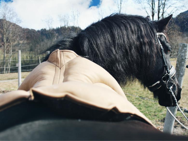 Garrido Reitkissen auf Pferd