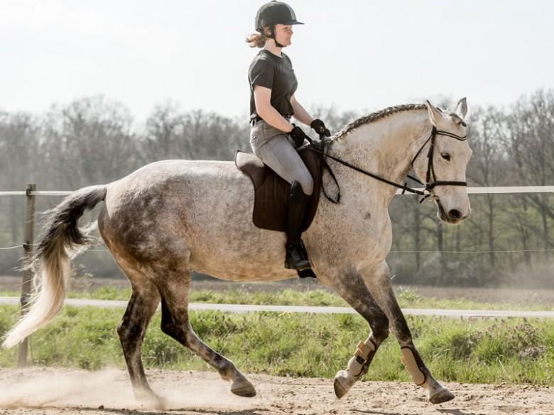 Gut für die Pferd-Mensch Beziehung: Reiten ohne Sattel...